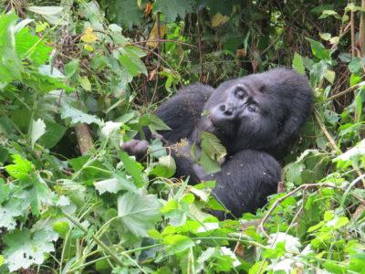 rwanda-travel guide